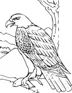 coloring book bald eagle