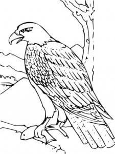 Free vector >> Vector clip art >> Coloring Book Bald Eagle clip art
